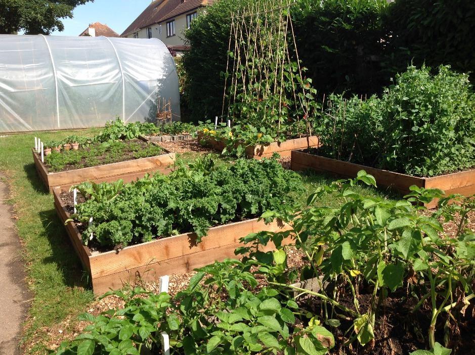 Littleham School vegetable garden